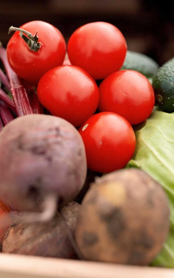 もりあわせ野菜素材