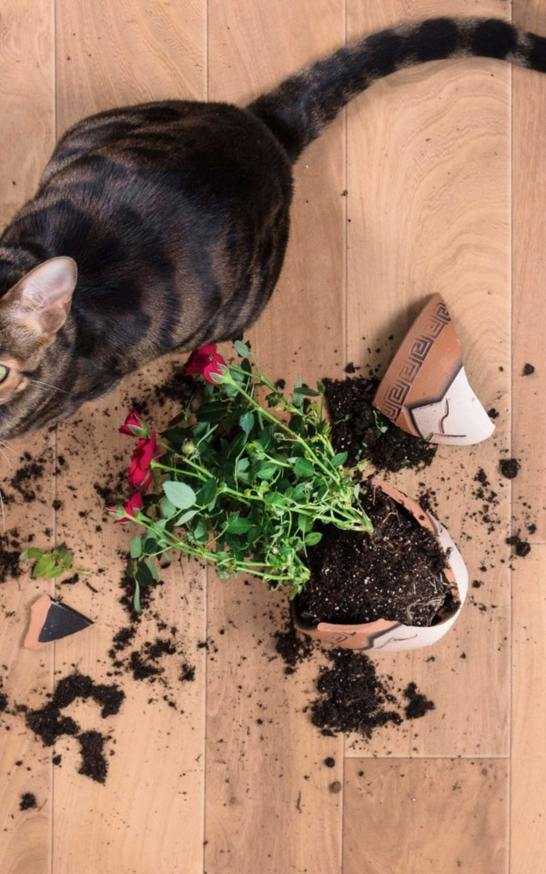 猫と壊れたプランター